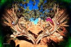 KViens_TreeMonsters1